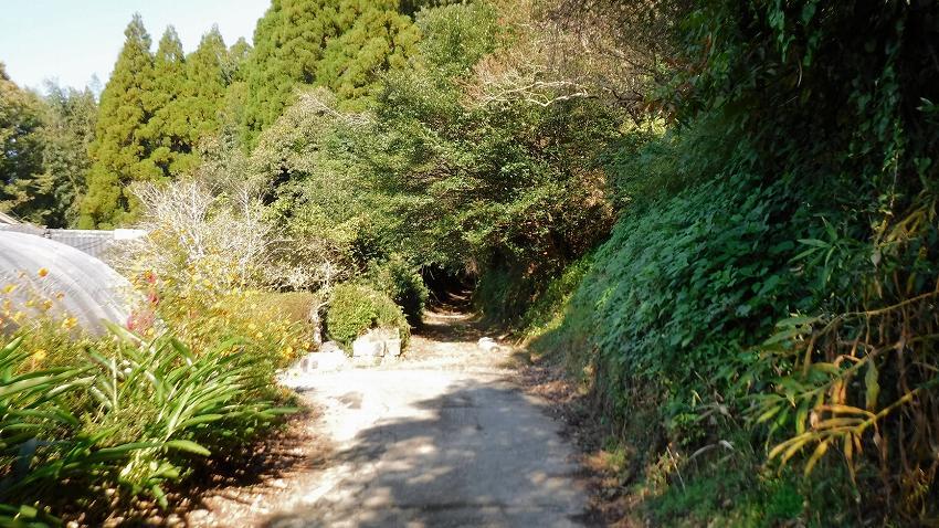 観福寺へ続く道